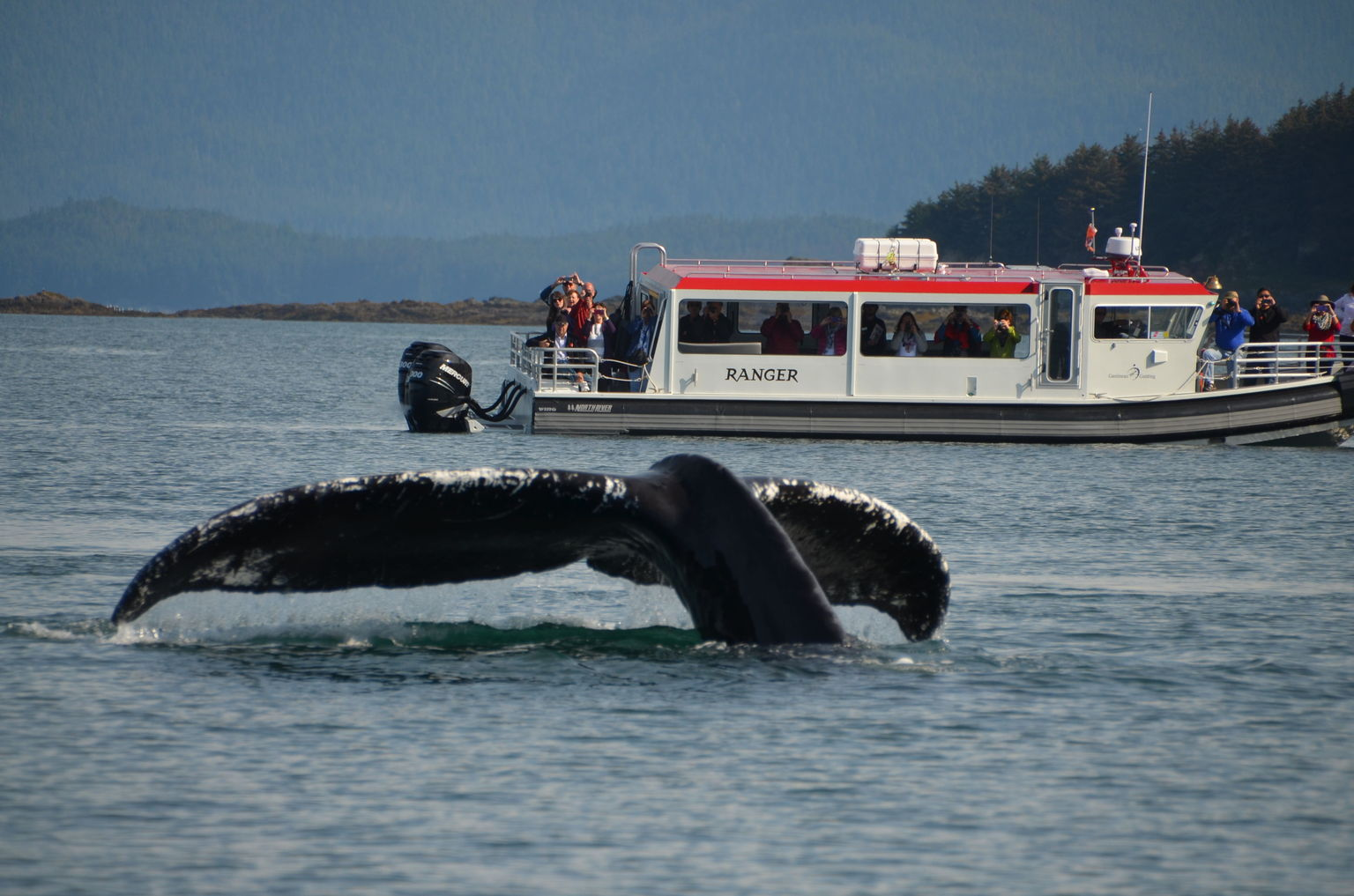 Whale Tail off Juneau