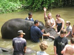 Bathing an elephant: I'm wet but having a ball! (Elephant sanctuary) - July 2011