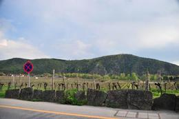 Photo of Vienna Wachau Valley Small-Group Tour and Wine Tasting from Vienna Vines