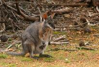 Photo of Adelaide Kangaroo Island
