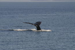 A Humpback Whale Spotted - May 2011