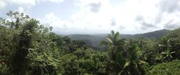 Photo of San Juan El Yunque Rainforest Half-Day Trip from San Juan Observatory