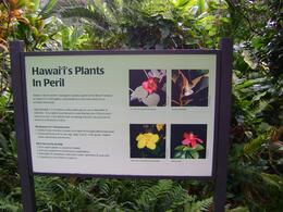 Photo of Oahu Valley of the Rainbows Oahu Small Group Adventure Some of the flowers we saw