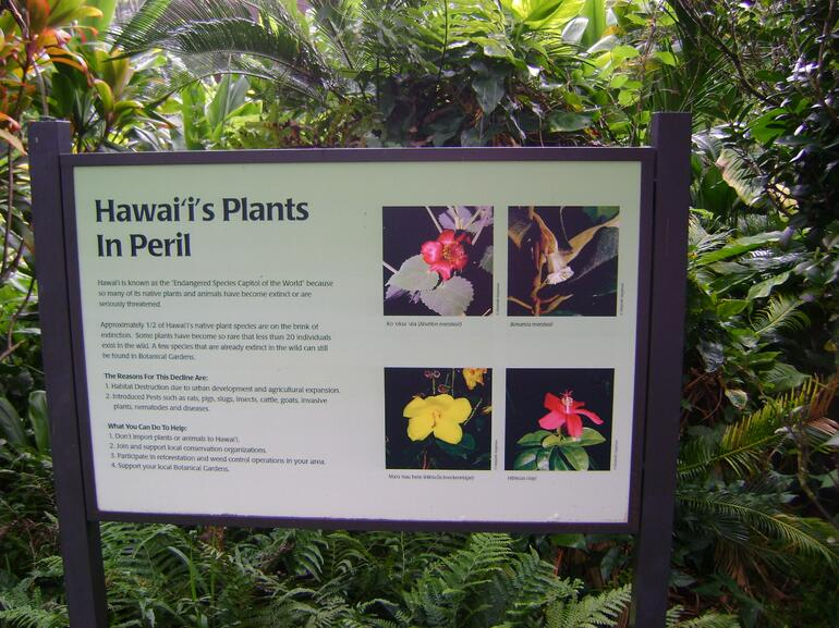 Some of the flowers we saw - Oahu
