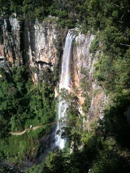 Photo of Brisbane Springbrook National Park Discovery Full-Day Bushwalk including Glow Worm Tour Waterfall