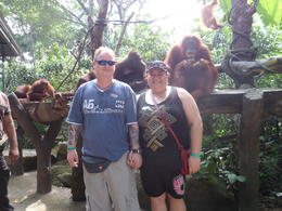 Photo of Singapore Singapore Zoo Morning Tour with optional Jungle Breakfast amongst Orangutans 16-10-2012