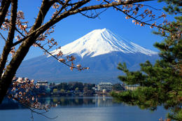 Mount Fuji viewed through cherry blossoms (sakura) - May 2011