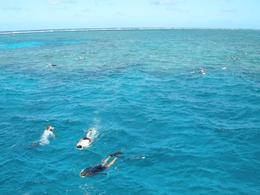 Photo of Cairns & the Tropical North Great Barrier Reef Scenic Helicopter Tour and Cruise from Cairns Snorkelling
