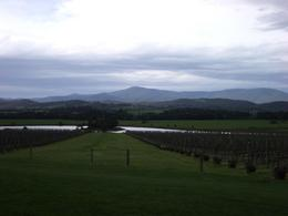 Photo of Melbourne Yarra Valley Wine and Winery Tour from Melbourne Beautiful view in Yarra Valley