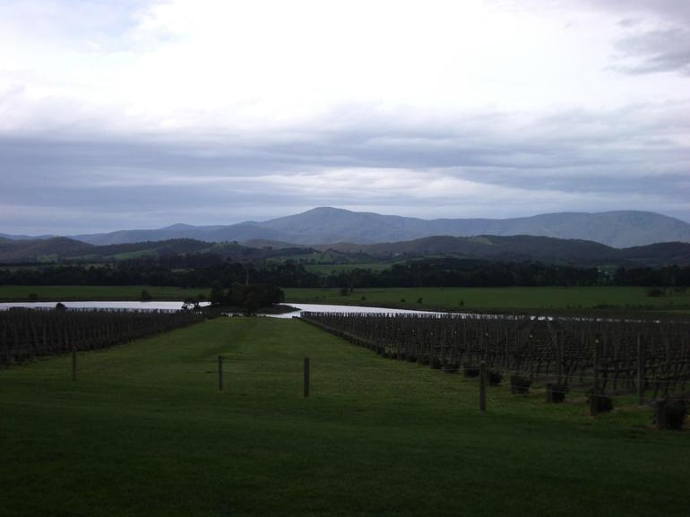 Beautiful view in Yarra Valley - Melbourne