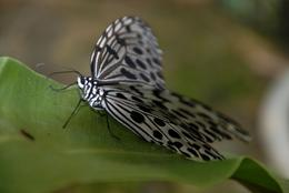 Photo of Penang Penang Butterfly Farm Half-Day Tour Penang Butterfly Farm & Botanical Garden