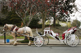 Photo of Victoria The Royal Carriage Tour Victoria by horse and carriage