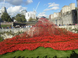 Photo of London Tower of London Entrance Ticket Including Crown Jewels and Beefeater Tour The beautiful poppy display.
