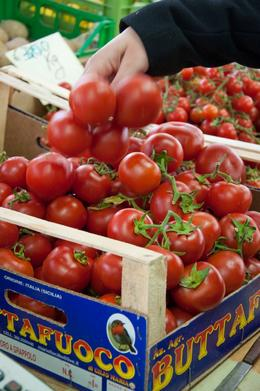 Photo of Florence Small-Group Italian Cooking Class in Florence The color on the tomatoes was AMAZING!