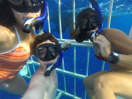 Photo of Oahu Oahu Shark Dive My Family in the cage.