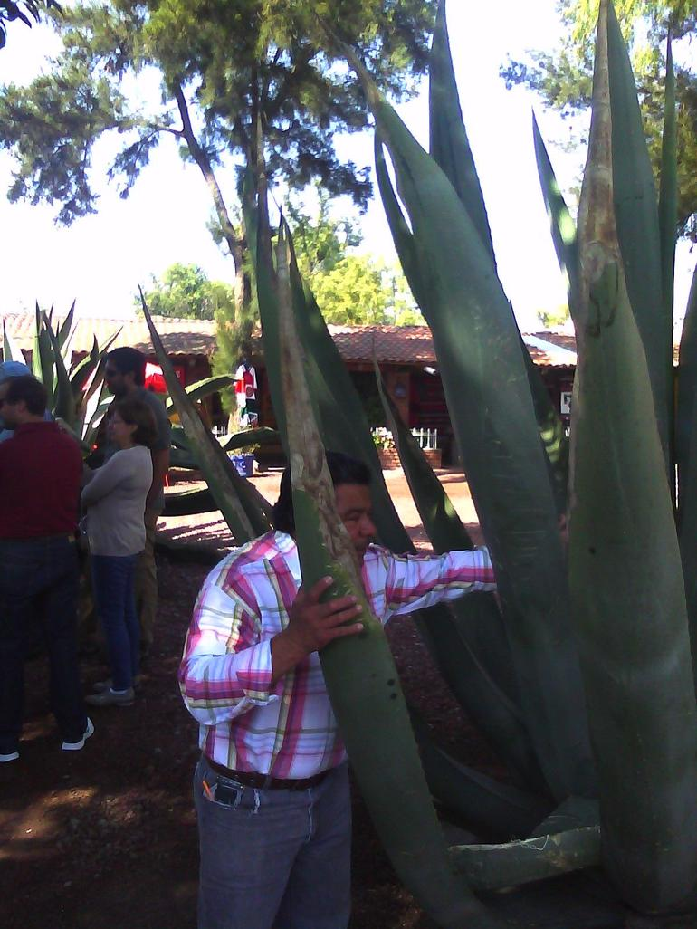 The Century Cactus-The Life and Blood of the Teotihuacan Culture - Mexico City