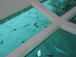 Photo of Sharm el Sheikh Glass Bottom Boat Cruise and Coral Reef Viewing View: Glass Bottom Boat Cruise of the Reef