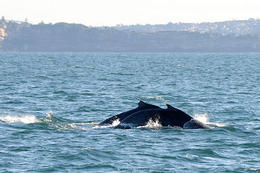 Photo of Sydney Sydney Eco Whale Watching Small Group Cruise Whale Watching