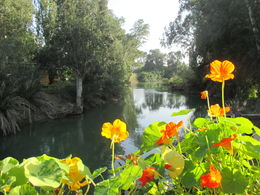 Photo of   Yardenit Baptismal Site along the Jordan River