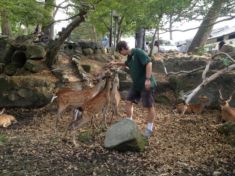 Feeding the deer in the Nara Deer Park.