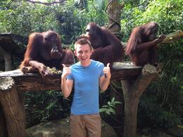 Orangutans at Singapore Zoo, Asha & Brock - July 2013