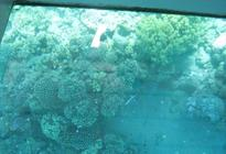 Photo of Sharm el Sheikh Glass Bottom Boat Cruise and Coral Reef Viewing