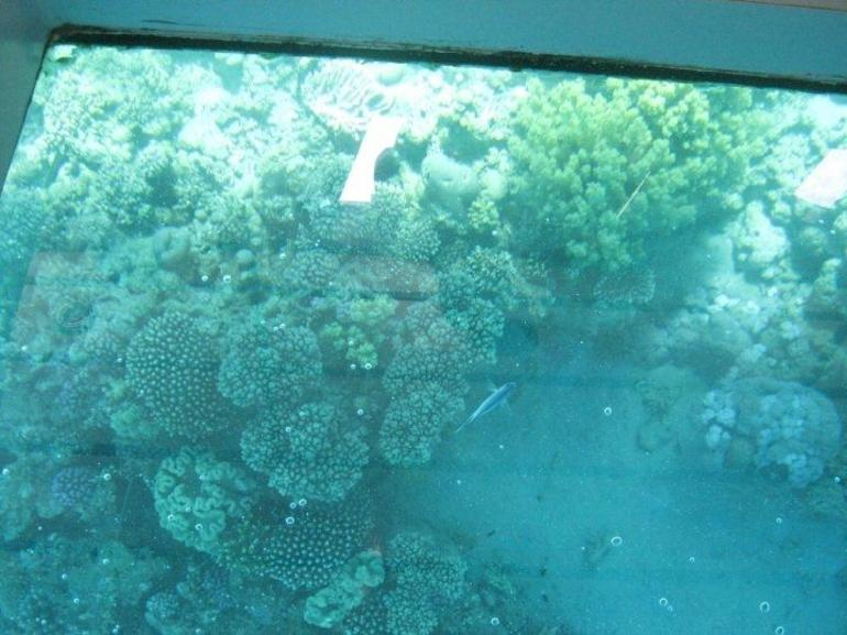 View of Coral Reef from Glass Bottom Boat, Sharm el Sheikh - Sharm el Sheikh