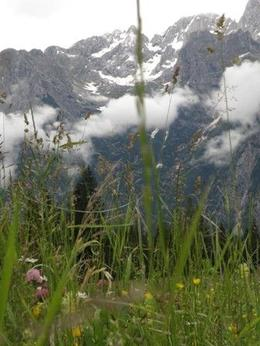This is a photo taken during a short photo stop along the road. This was a field of wildflowers with the Dolomites rising in the background -- with snow in late June!, Andrew C. C - July 2009