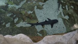 The shark tanks are great! They have all kinds of different sharks from baby ones to giant killers!, Josh - February 2015