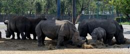 Photo of Bangkok Bangkok Safari World Zoo and Marine Park rhino`s