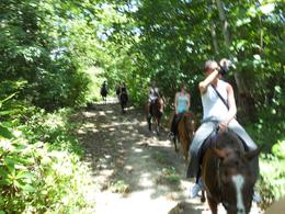 Photo of Ocho Rios Heritage Beach Horse Ride Calm Horses