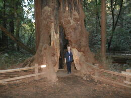In awe of the redwoods , Gail W - November 2014