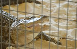 After airboat ride you will see a wildlife show , Ira F - May 2015