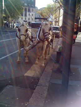 Horse and carriage ride at the Rocks., eva_afta - November 2010
