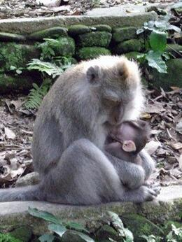 Photo of   Mommy and baby monkey