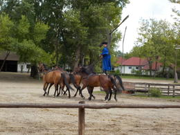 Photo of Budapest Puszta Great Plains and Kecskemet Day Trip from Budapest one rider, 5 horses!