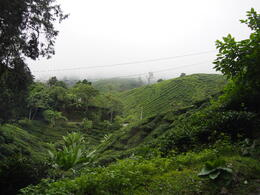Photo of Singapore 7-Day Tour from Singapore: Malacca, Kuala Lumpur, Cameron Highlands and Penang tea plantation