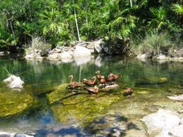 Photo of Cancun Xel-Ha All Inclusive Day Trip from Cancun Xel-Ha All Inclusive Day Trip from Cancun