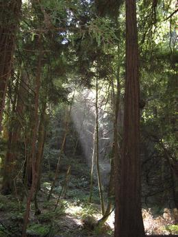 California Touris Attraction - San Francisco - Redwoods