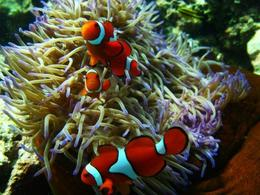 My first visit to the Great Barrier Reef - March 2010