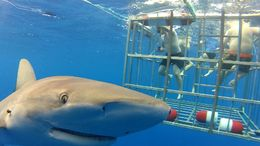 Up close and personal with the sharks., Erik - October 2015