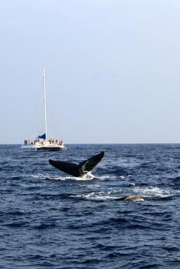 Whales emerging from the water! - May 2013