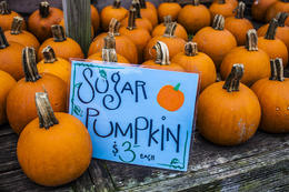 Photo of Boston Fall Foliage Sightseeing Tour from Boston The Sugar Pumpkins....