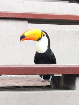 Tucan , fionatully - October 2015