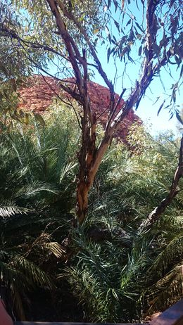 Amazing bits of greenery and small oasis' among the red earth , Haidee W - September 2015