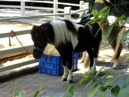 Photo of Bangkok Bangkok Safari World Zoo and Marine Park pony