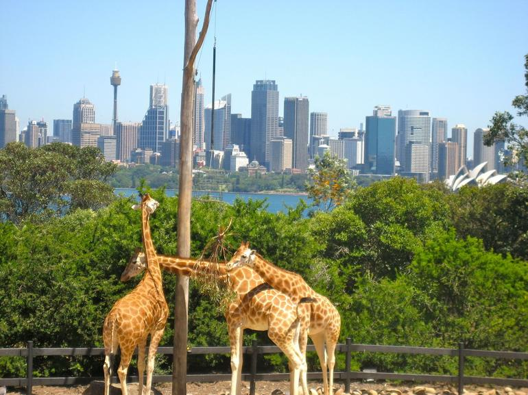 view from the zoo - Sydney