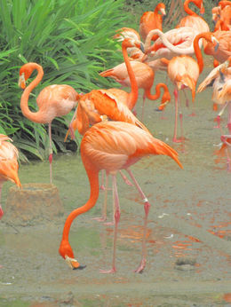 Flamingos , fionatully - October 2015