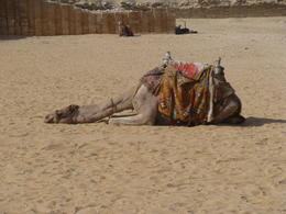 Photo of Cairo Private Tour: Giza Pyramids, Sphinx, Memphis, Sakkara I'll just have a little rest between tourists