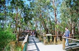The walkway in the trees to get you closer to the koalas., Lisa C - February 2009